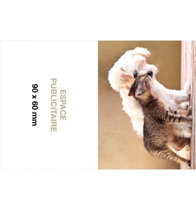 Calendrier Pharmacie Chiens et Chats
